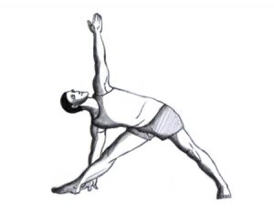benefits of practising yoga for the spine  alamba yoga